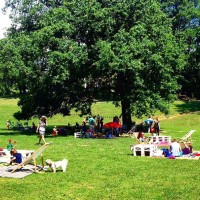 Zagreb Picnic – a pleasant gathering in Maksimir Park